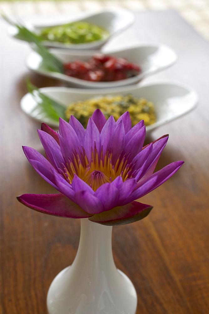 Lotus flower and ayurvedic food at Heritance Maha Gedara Ayurveda Resort at Beruwela, Southwest coast, Sri Lanka