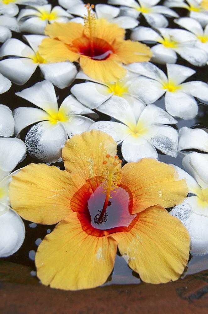 Flowers in a clay pot, Ranweli Holiday Village, Resort, Waikkal next to Negombo, Sri Lanka