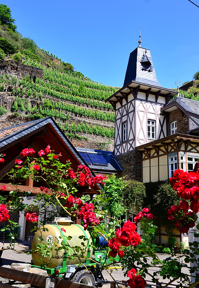 Mayschoss in the Ahr Valley, Eifel, Rhineland-Palatinate, Germany