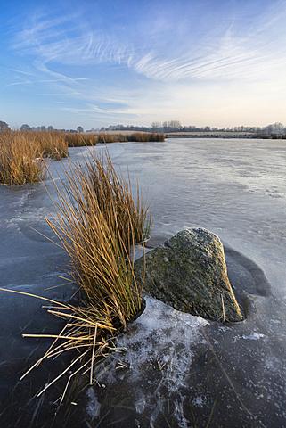 Katenhofer moor, Daenisch Wohld, Rendsburg-Eckernfoerde, Schleswig-holstein, Germany