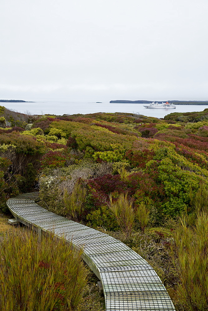 Boardwalk throgh native vegetation with expedition cruise ship MS Hanseatic (Hapag-Lloyd Cruises) in background, Enderby Island,