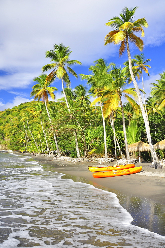 palm trees and boats on Anse Mamin beach, Anse Chastanet, sea, Soufriere, St. Lucia, Saint Lucia, Lesser Antilles, West Indies, Windward Islands, Antilles, Caribbean, Central America - 1113-102309