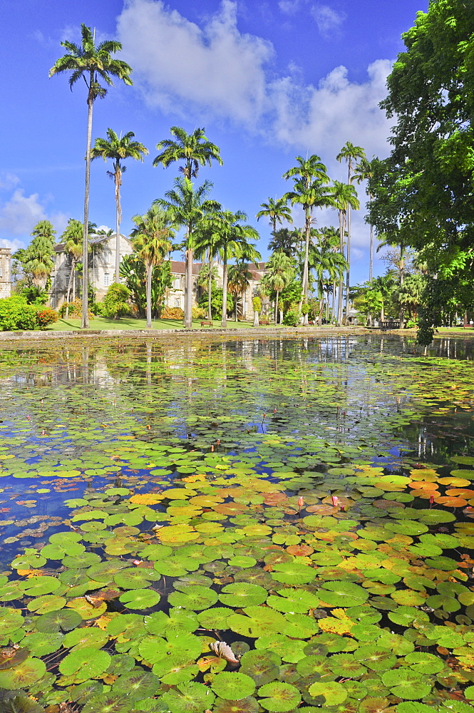 Pond with water lilies, Codrington College, Condrington Plantation, Barbados, Lesser Antilles, West Indies, Windward Islands, Antilles, Caribbean, Central America - 1113-102339