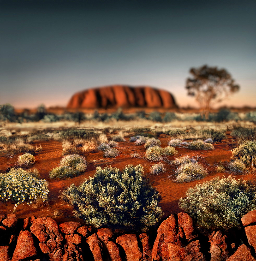 Ayers Rock (Uluru) at sunset, Northern Territory, Australia