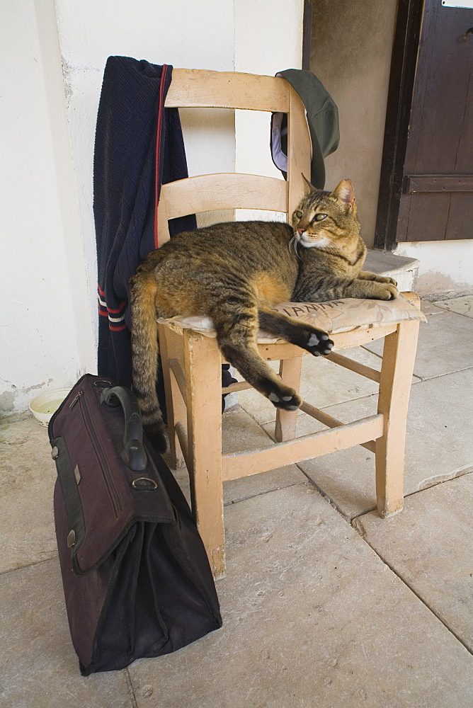 Cat lying on a chair in Neofytos monastary, near Paphos, South Cyprus, Cyprus - 1113-2466