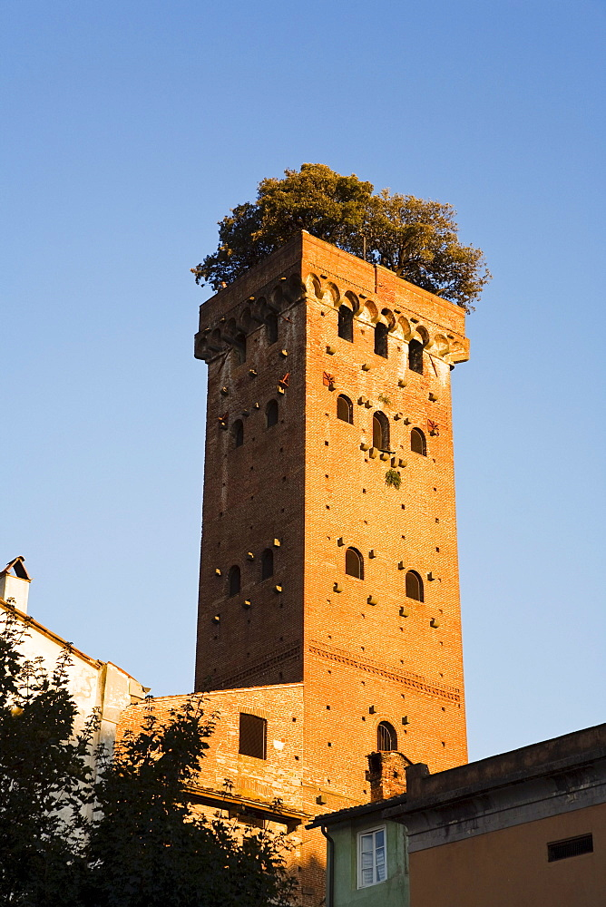 Torre Guinigi Tower, Lucca, Tuskany, Italy