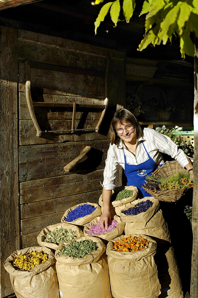A smiling woman and sacks of medicinal herbs in front of an alpine hut in the sunlight, Siusi, Valle Isarco, South Tyrol, Italy, Europe