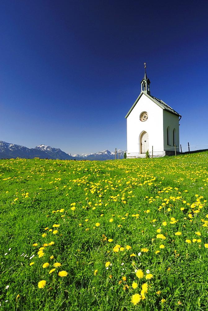 Chapel in meadow with dandelion, Allgaeu, Bavaria, Germany