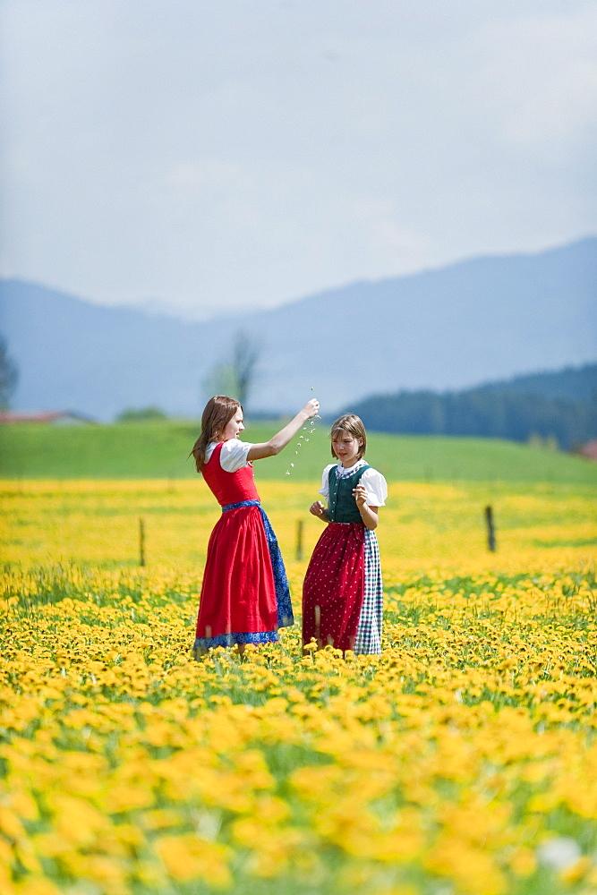 Two girls in meadow of dandelions, Antdorf, Upper Bavaria, Germany
