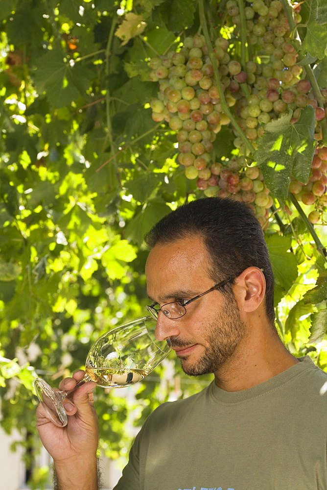Sophocles Vlassides, Oenologist and managing director, winetasting, Vlassides Winery, Koilani, Troodos mountains, Cyprus