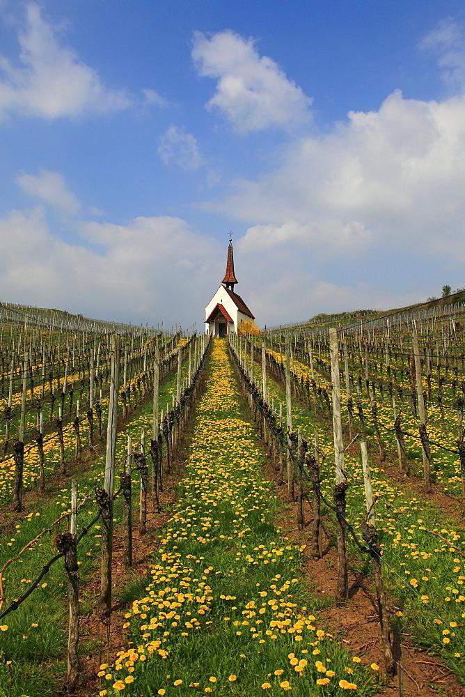 Eichert chapel in the vineyards near Jechtingen, Kaiserstuhl, Breisgau, Black Forest, Baden-Wuerttemberg, Germany