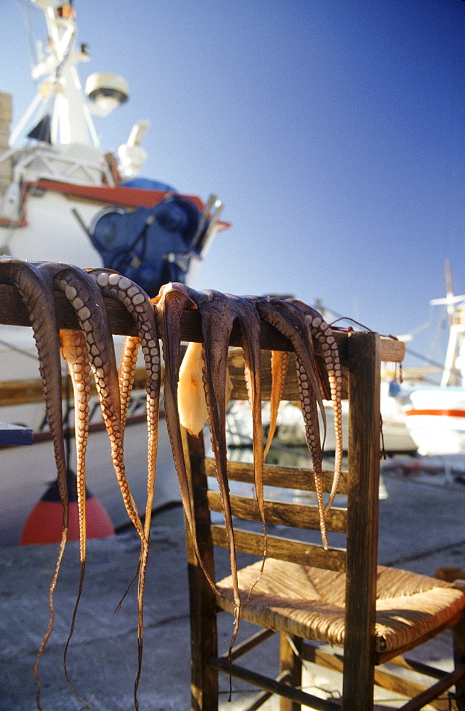 Calamari drying in the sun, sun-dried calamari, Naussa, Paros, Mediterranean sea, Greece, Europe