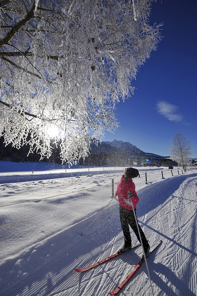 Woman cross-country skiing near Koessen in Kaiserwinkl, Winter in Tyrol, Austria