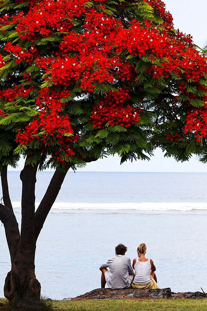 A couple sitting under a Flamboyant tree in Saint Leu, La Reunion, Indian Ocean
