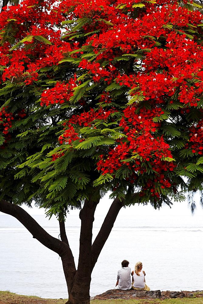 A couple sitting under a Flamboyant tree in Saint Leu, La Reunion, Indian Ocean