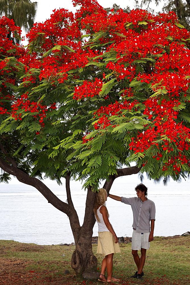 A couple standing under a Flamboyant tree in Saint Leu, La Reunion, Indian Ocean