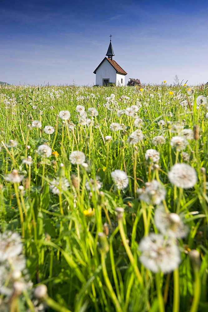 View of Saalenberg chapel in spring, Hexental, Black Forest, Baden-Wuerttemberg, Germany, Europe