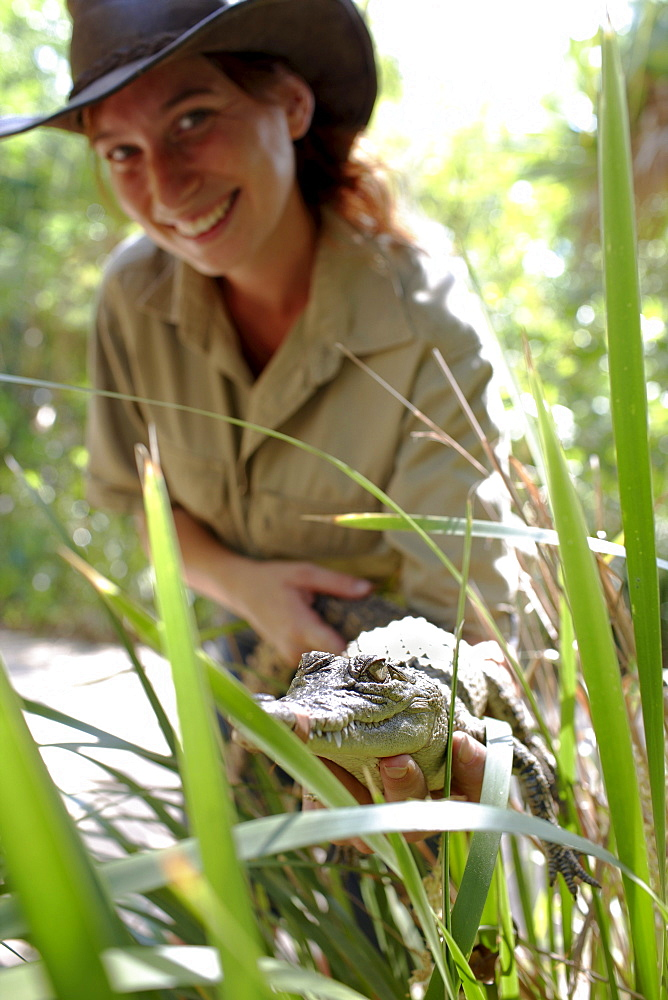 Ranger showing baby crocodile at Bungalow Bay Koala Village, Horseshoe Bay, northcoast of Magnetic island, Great Barrier Reef Marine Park, UNESCO World Heritage Site, Queensland, Australia