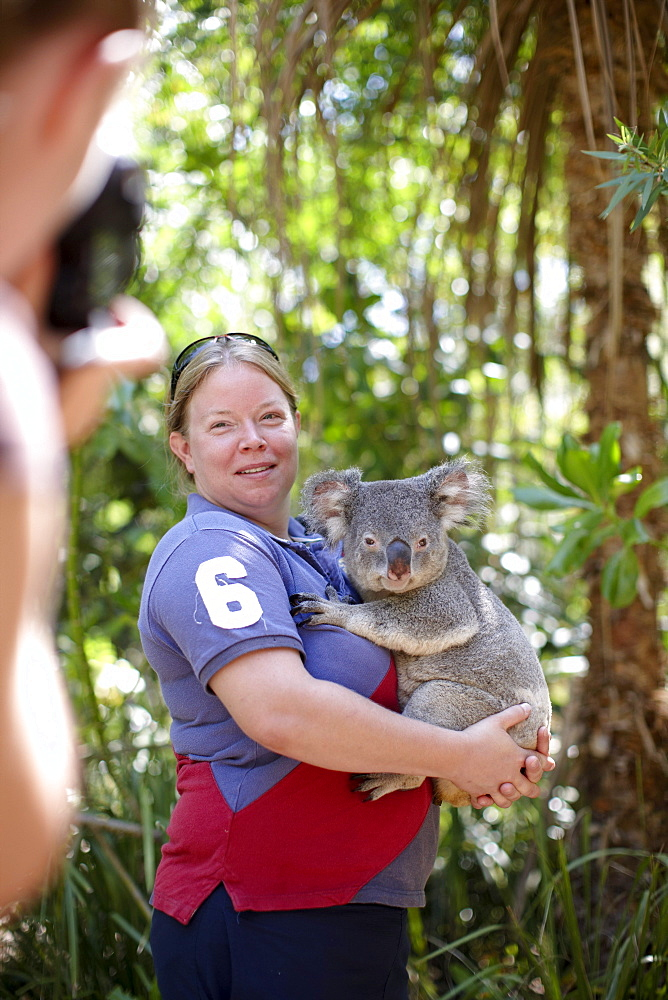 Tourist holding a koala at Bungalow Bay Koala Village, Horseshoe Bay, northcoast of Magnetic island, Great Barrier Reef Marine Park, UNESCO World Heritage Site, Queensland, Australia