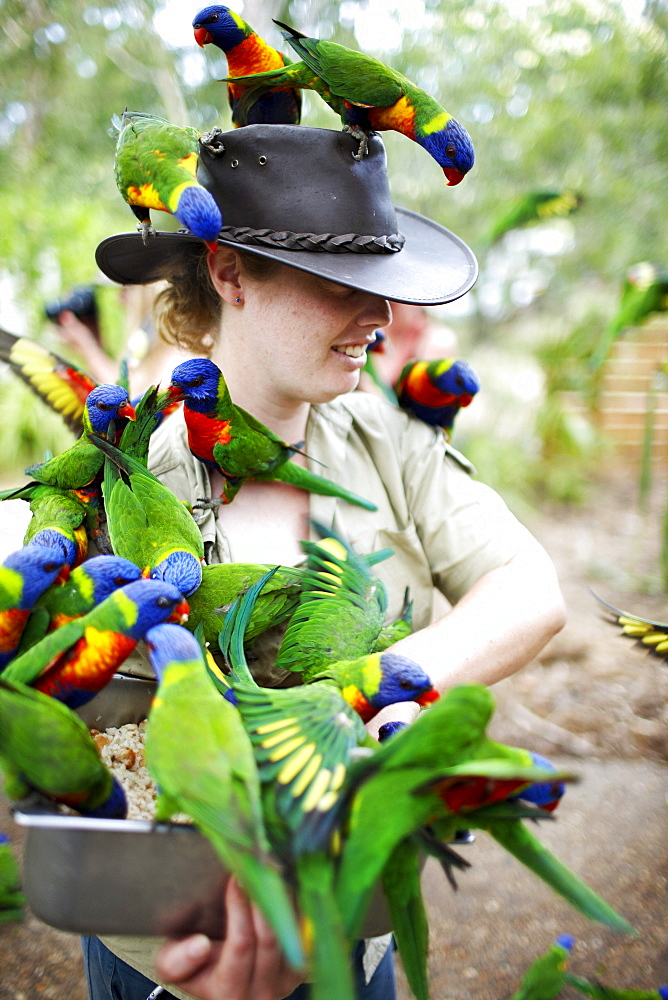Ranger with Rainbow Lorikeets at Bungalow Bay Koala Village, Horseshoe Bay, northcoast of Magnetic island, Great Barrier Reef Marine Park, UNESCO World Heritage Site, Queensland, Australia