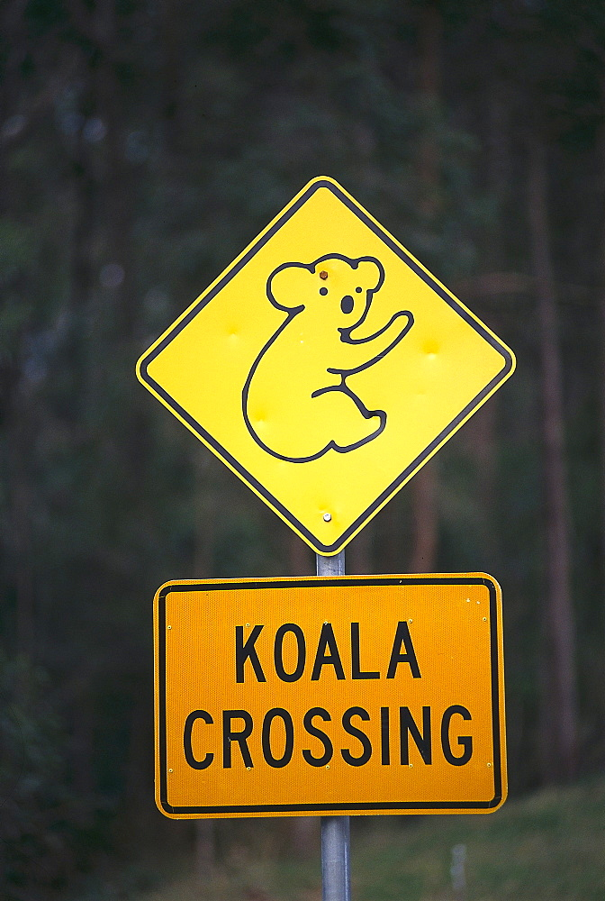 Koala Warning Sign, Near Woombah, NSW, Australia