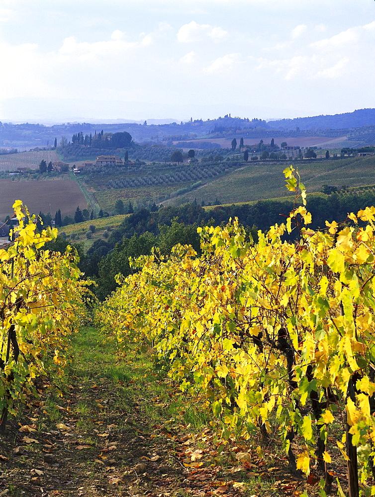 Vineyards, Chianti, Tuscany, Italy