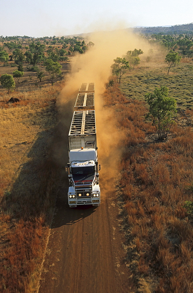 aerial view of livestock truck, triple-trailer driving on dirt road, Kimberley, Western Australia