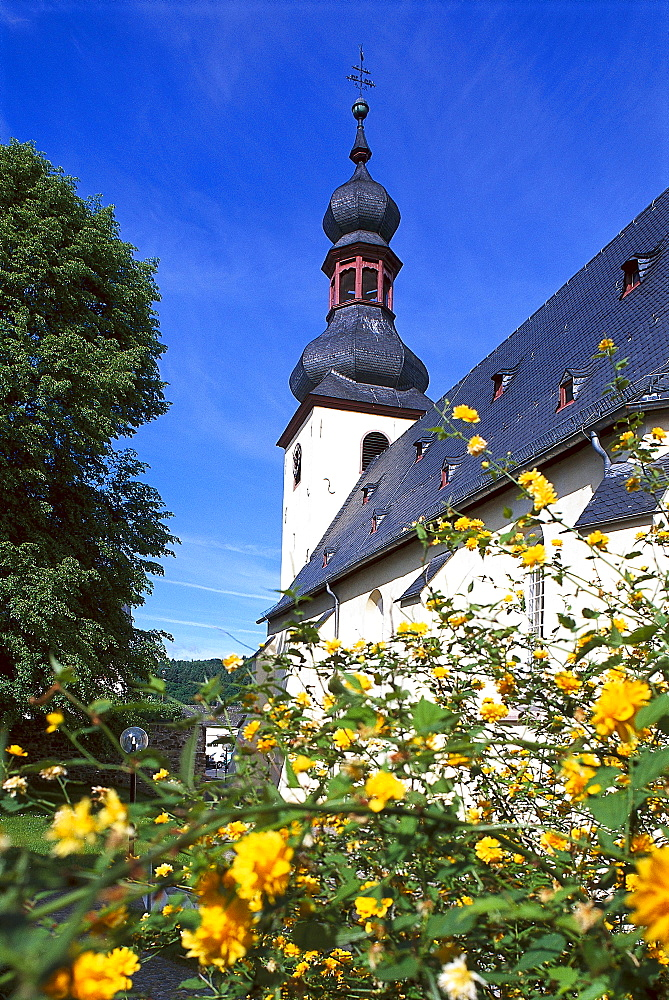 Blooming bush in front of monastery St. Ferrutius, Taunusstein, Bleidenstedt, Taunus, Hesse, Germany, Europe