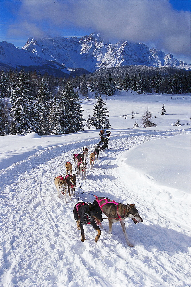 Dogsled Race in the Dolomites, Alpencross, South Tyrol, Italy