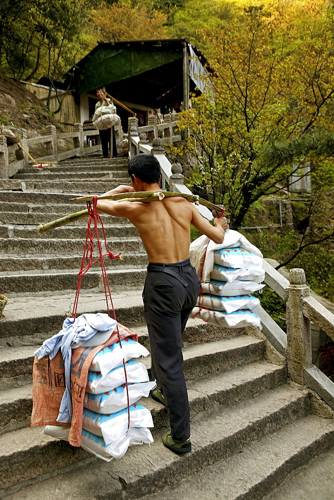Porter carrying heavy load up stone stairs, Jiuhua Shan, Anhui province, China, Asia