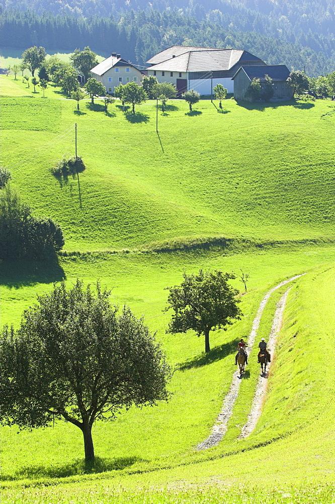 zwei reiter im schritt auf einem feldweg, morgenstimmung, muehlviertel, austria