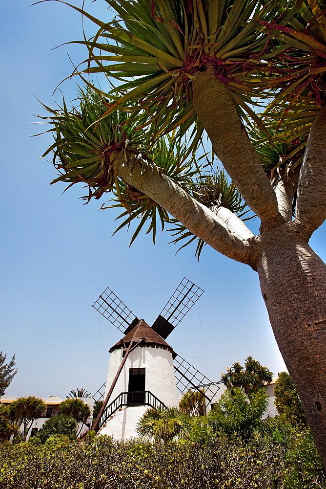 Windmill at the Pueblo Majarero, Museo Molino, Antigua, Fuerteventura, Canary Islands, Spain