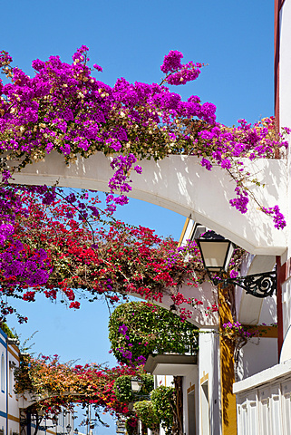 Houses with flowers, Puerto de Mogan, Gran Canaria, Canary Islands, Spain, Europe