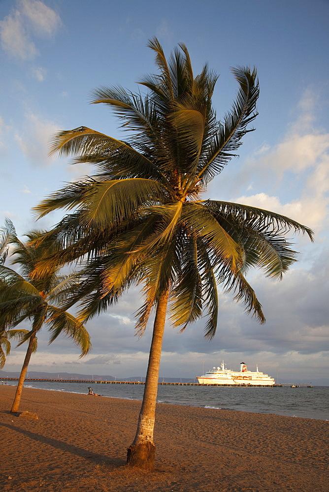 Coconut tree at beach with cruise ship MS Deutschland, Reederei Peter Deilmann at pier, Puntarenas, Costa Rica, Central America