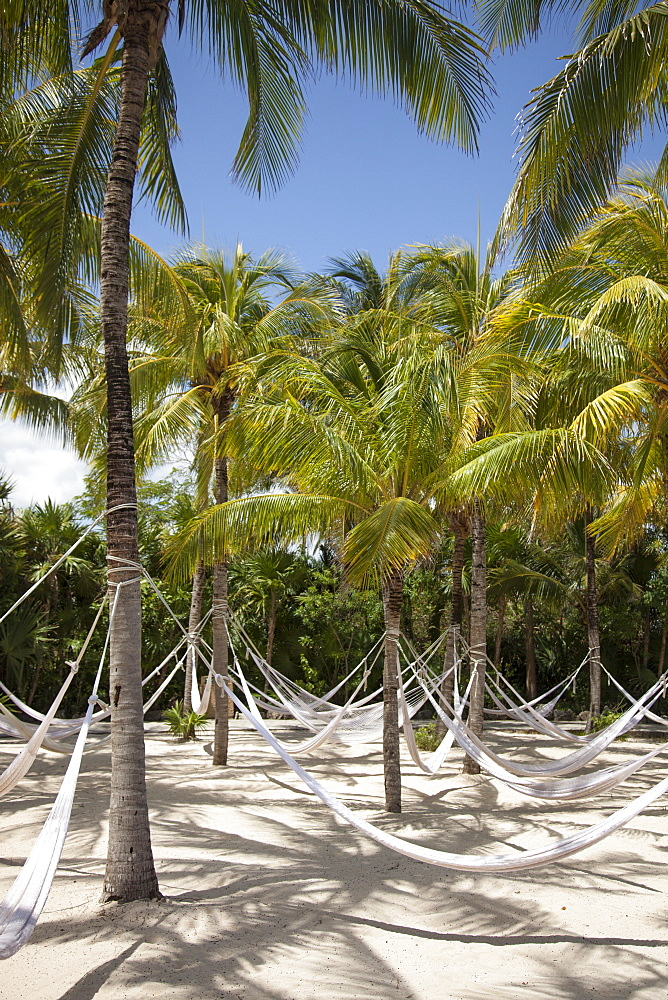 Hammocks hang from coconut trees at Xel-Ha Water Park, Tulum, Riviera Maya, Quintana Roo, Mexico