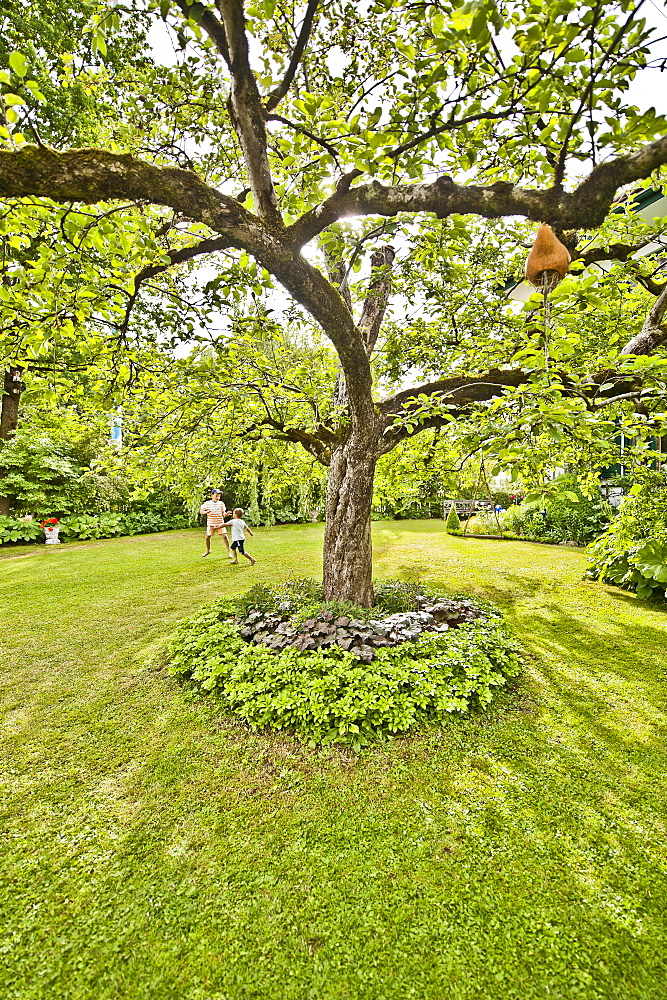 Garden with a tree in the middle, Magnetsried, Weilheim-Schongau, Bavarian Oberland, Upper Bavaria, Bavaria, Germany
