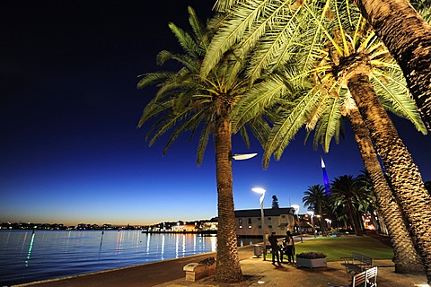 Palm trees between Swan River and Riverside Drive in the evening, Central City Area, Perth, Western Australia, WA, Australia