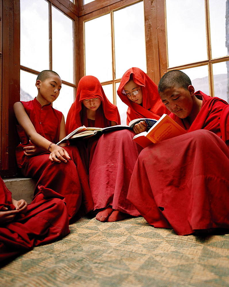Students reading at the nunnery Chullichan Nunnery School, convent Rizong west of Leh, Ladakh, Jammu and Kashmir, India