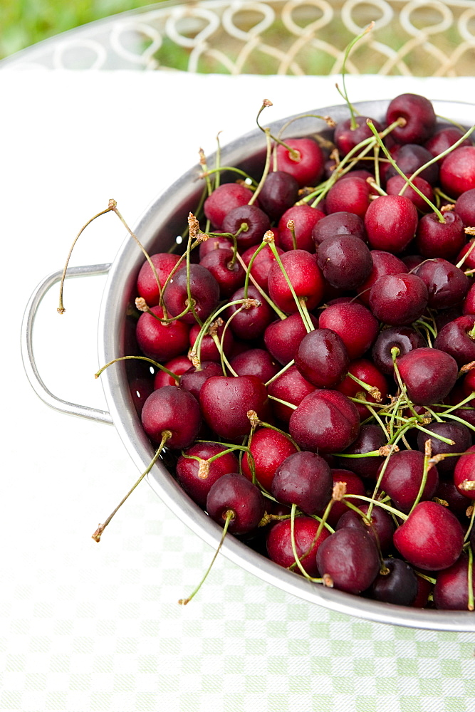 Freshly picked cherries in a sieve, harvest, Fruit