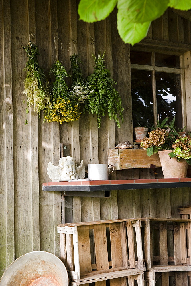Herbs hung up to dry on the outside of a garden shed, Garden, Homemade
