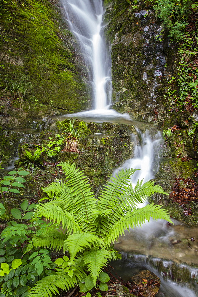 Stream and fern, Seelisberg, Lake Lucerne, Switzerland, Europe