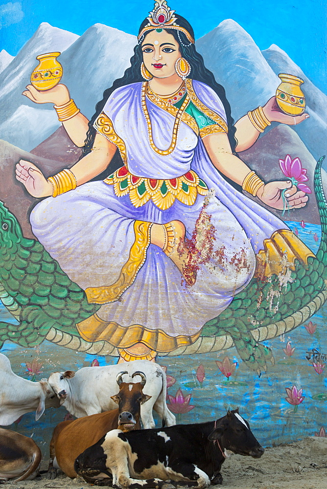 Cattle relax in front of mural of Lakshmi, Goddess of Wealth and Beaty, on a water tower at Dasaswamedh Ghat, Varanasi, Uttar Pradesh, India