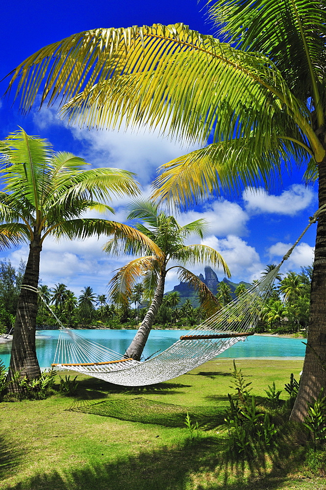 Hammock between two palm trees, Saint Regis Bora Bora Resort, Bora Bora, Society Islands, French Polynesia, Windward Islands, South Pacific