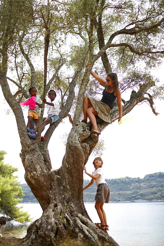 Kids climbing an old tree near Hotel Sipan, Sipanska Luka, Sipan island, Elaphiti Islands, northwest of Dubrovnik, Croatia