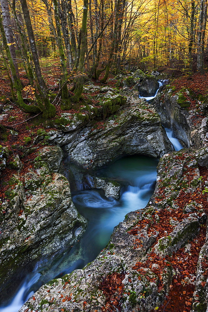 Suha mountain stream meanders through the limestone rocks in primeval beech forests of the Triglav National Park, Gorenjska, Slovenia