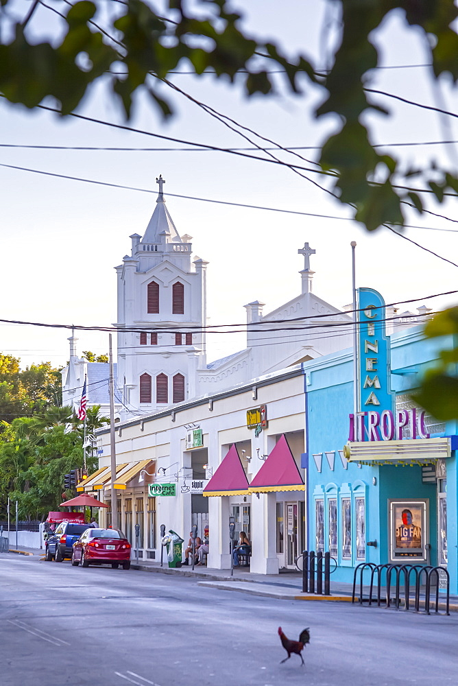 Chicken crossing the street in front of the Tropic Cinema and St. Pauls Episcopal Church, Key West, Florida Keys, USA
