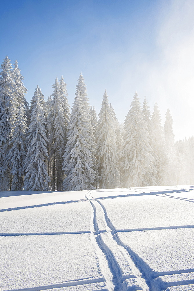 Snow covered trees and ski tracks, Schauinsland, near Freiburg im Breisgau, Black Forest, Baden-Wuerttemberg, Germany