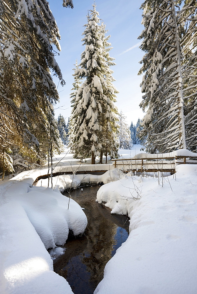 Snow covered trees and small stream, Bernau, Black Forest, Baden-Wuerttemberg, Germany