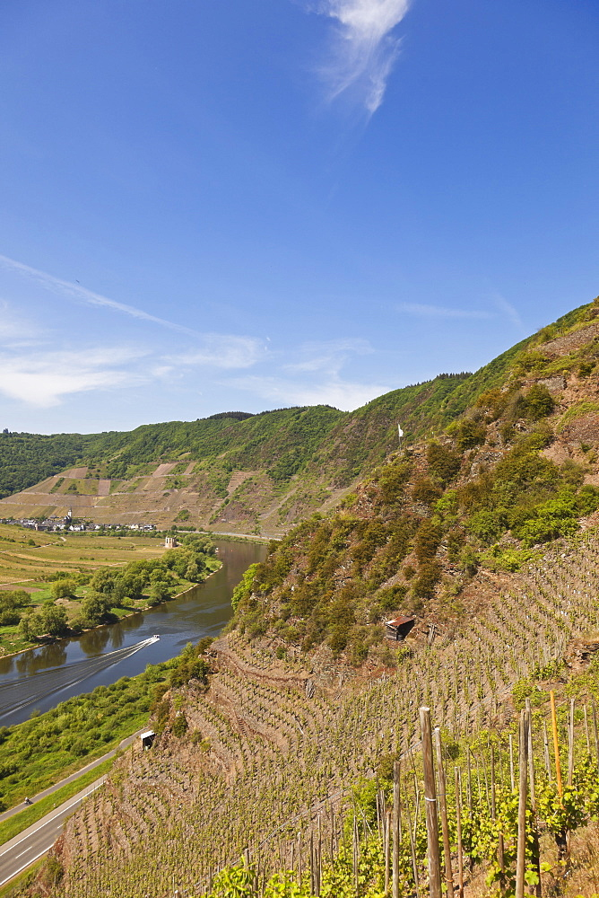 Vineyards on Calmont near Eller, Eller, Rheinland-Pfalz, Germany