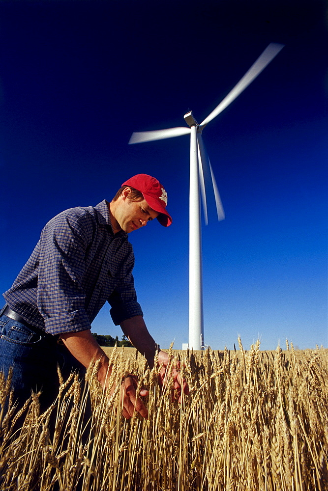 Farmer in Wheat Field near Wind Turbine, St. Leon, Manitoba